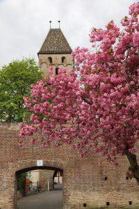 Ulm весной