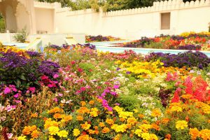 Hamilton Gardens India