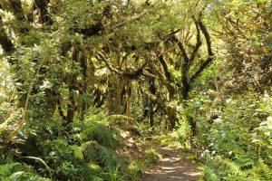 Dawson Falls hike, Taranaki National park