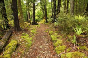 Braeburn Walk