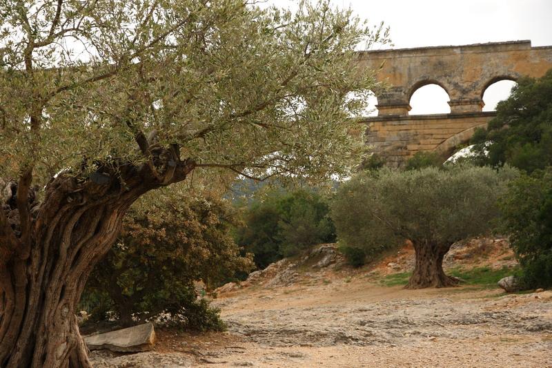 Pont du Gard and olives