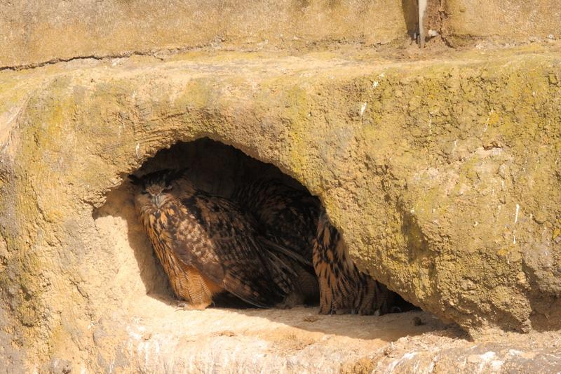 орнитологический парк Пон-де-Гау