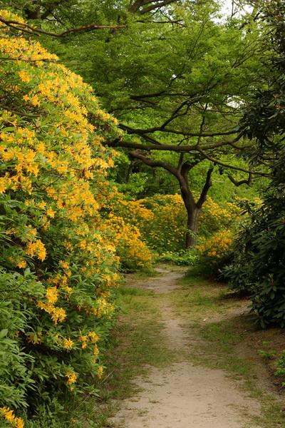 Kromlau park