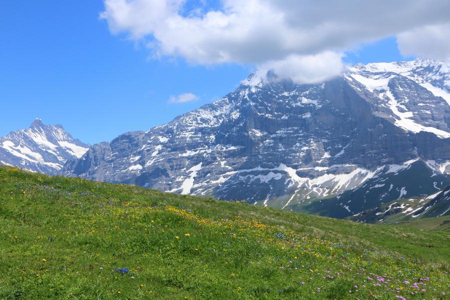 Mönch, Grindelwald