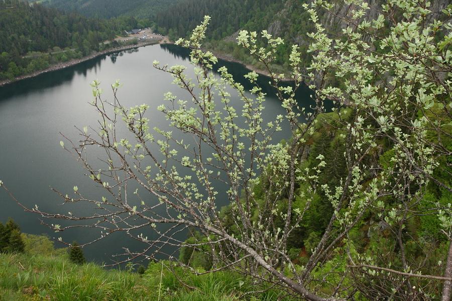 Lac Blanc, les Vosges