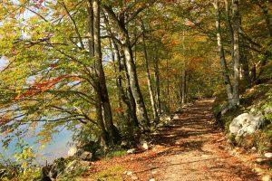 bohinj, path