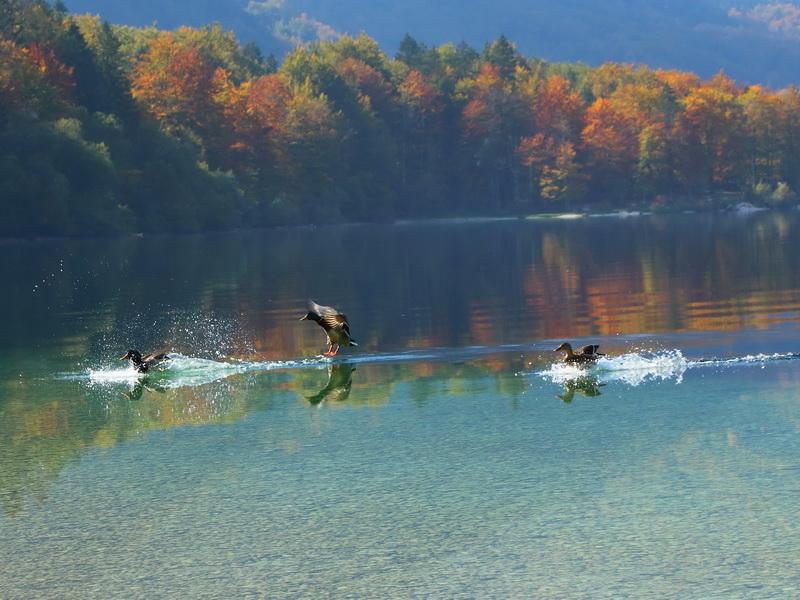 Bohinjsko jezero