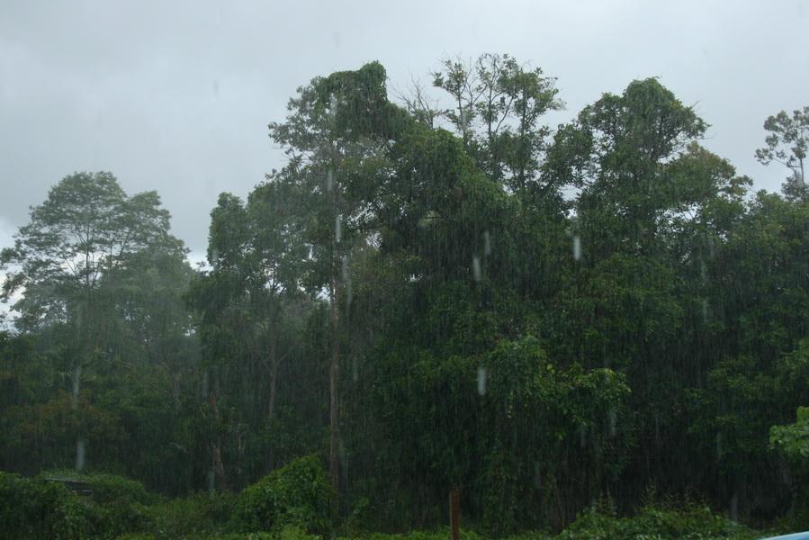 ливень в тропических джунглях