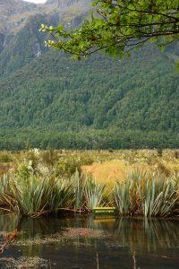 milford road - mirror lakes